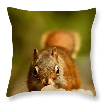 Red Squirrel   Throw Pillow by Cale Best