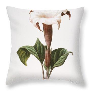 Redoute: Datura, 1833 Throw Pillow by Granger