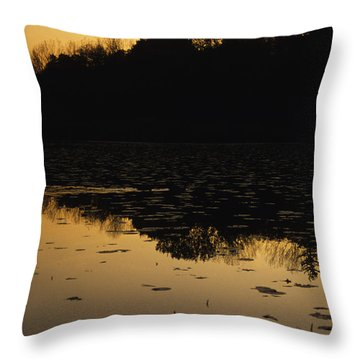 Reflection In The Water At Everglades Throw Pillow by Stacy Gold