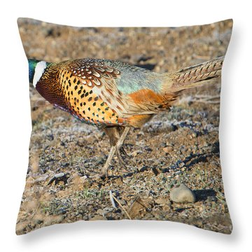 Ring-necked Pheasant Rooster Throw Pillow by Mike Dawson