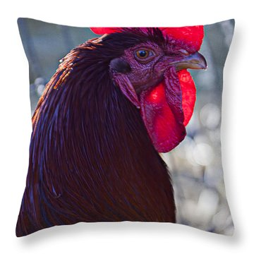 Rooster With Bright Red Comb Throw Pillow by Garry Gay