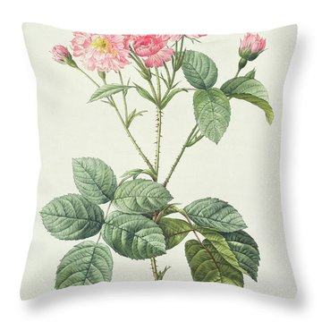 Rosa Centifolia Caryophyllea Throw Pillow by Pierre Joseph Redoute