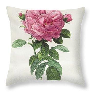 Rosa Gallica Flore Giganteo Throw Pillow by Pierre Joseph Redoute