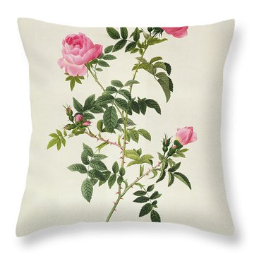 Rosa Sepium Flore Submultiplici Throw Pillow by Pierre Joseph Redoute