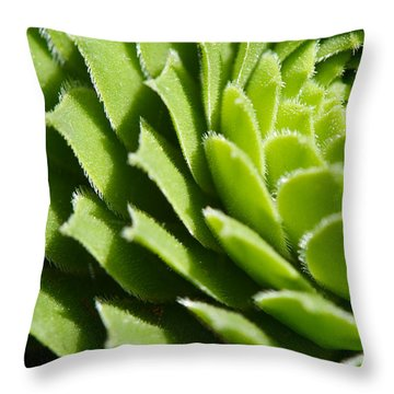 Rosette Throw Pillow by Lisa Knechtel
