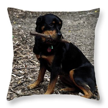 Rottweiler Dog Holding Stick In Mouth Throw Pillow by Sally Weigand