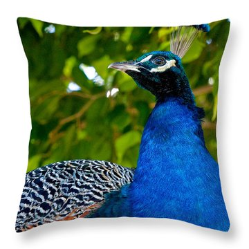 Royal Bird Throw Pillow by Christopher Holmes