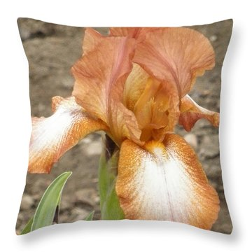 Rusty Throw Pillow by Barbara Keith
