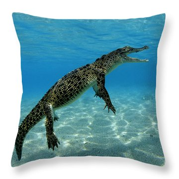 Saltwater Crocodile Throw Pillow by Franco Banfi and Photo Researchers