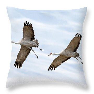 Sandhill Crane Approach Throw Pillow by Mike Dawson