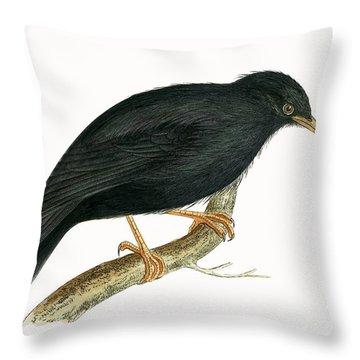 Sardinian Starling Throw Pillow by English School