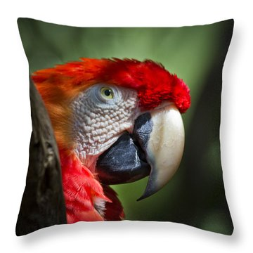 Scarlet Macaw Throw Pillow by Roger Wedegis