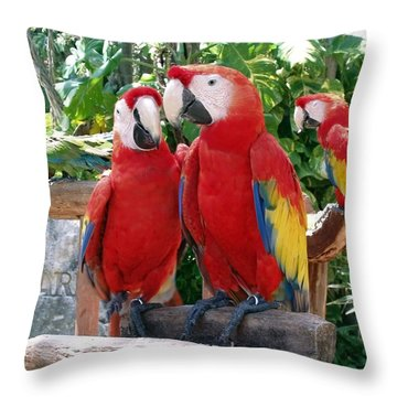 Scarlet Macaws Throw Pillow by Ellen Henneke