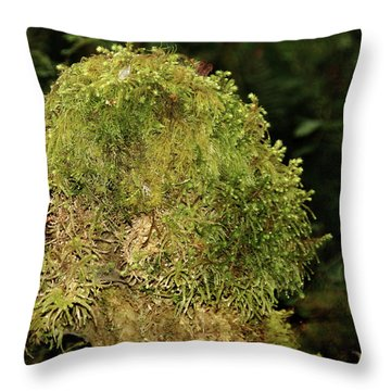 Seasons Of Magic - Hoh Rainforest Olympic National Park Wa Throw Pillow by Christine Till