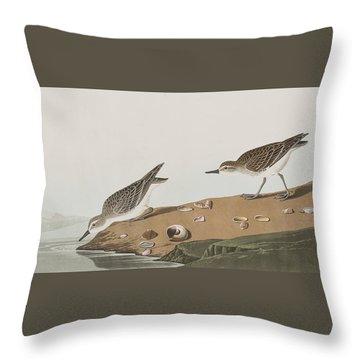 Semipalmated Sandpiper Throw Pillow by John James Audubon
