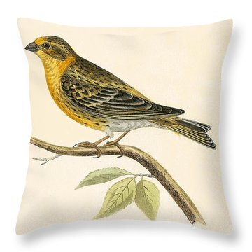 Serin Finch Throw Pillow by English School