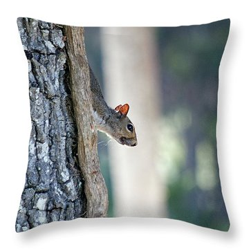 Shy Squirrel Throw Pillow by Kenneth Albin