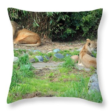 Siesta Time Throw Pillow by Suzanne Gaff