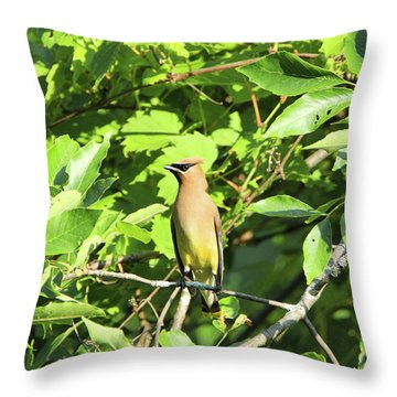 Sitting Pretty Throw Pillow by David Stasiak