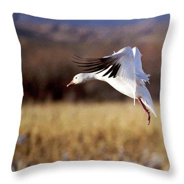 Snow Goose Throw Pillow by Steven Ralser