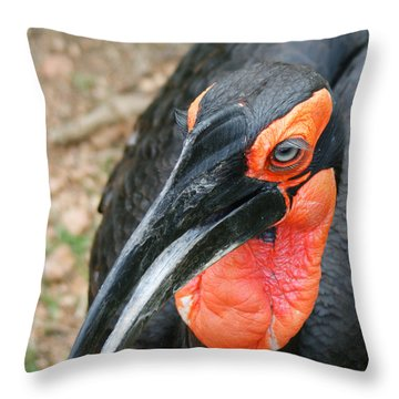 Southern Ground Hornbill Throw Pillow by Ernie Echols