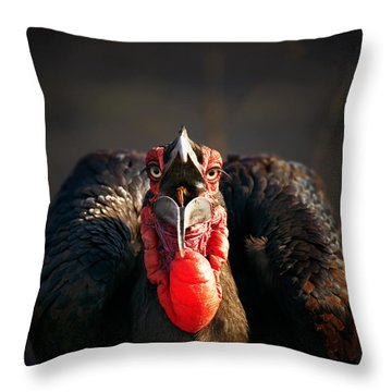 Southern Ground Hornbill Swallowing A Seed Throw Pillow by Johan Swanepoel