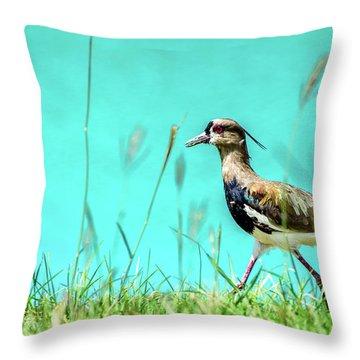 Southern Lapwing Throw Pillow by Randy Scherkenbach