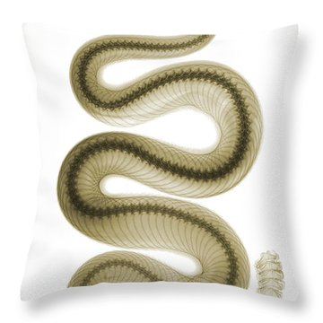 Southern Pacific Rattlesnake, X-ray Throw Pillow by Ted Kinsman