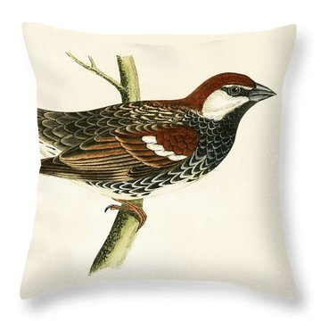 Spanish Sparrow Throw Pillow by English School