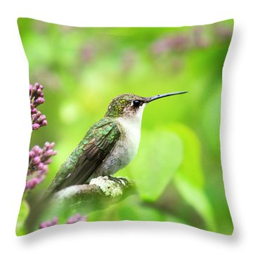 Spring Beauty Ruby Throat Hummingbird Throw Pillow by Christina Rollo