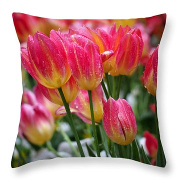 Spring Tulips In The Rain Throw Pillow by Rona Black