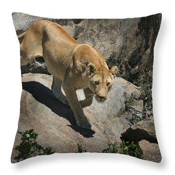 Stalking Humans Throw Pillow by Joseph G Holland