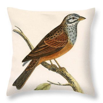 Striolated Bunting Throw Pillow by English School