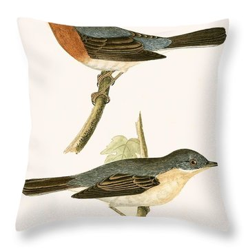 Sub Alpine Warbler Throw Pillow by English School