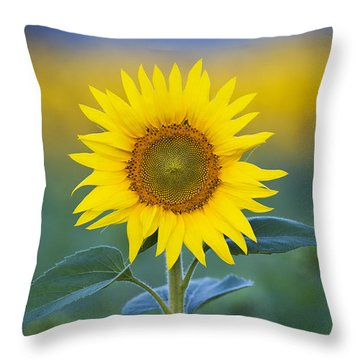 Sunflower Throw Pillow by Tim Gainey