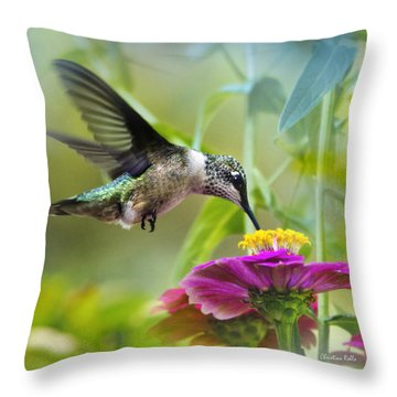 Sweet Success Hummingbird Square Throw Pillow by Christina Rollo