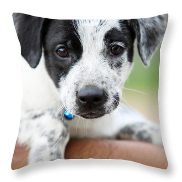 Sweetness Throw Pillow by Amanda Barcon