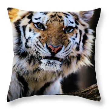 That Tiger Look Throw Pillow by Karol Livote