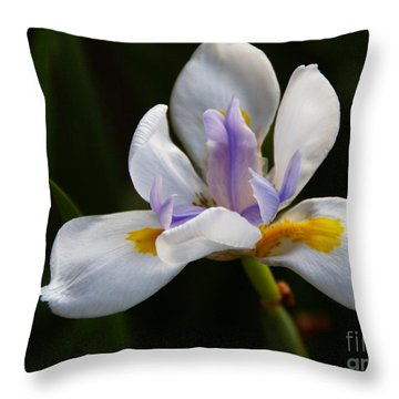 The Beckoning Throw Pillow by Linda Knorr Shafer