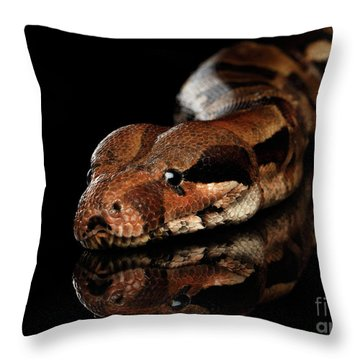The Boa Constrictors, Isolated On Black Background Throw Pillow by Sergey Taran