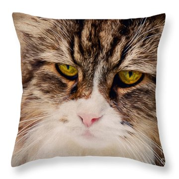 The Cat Throw Pillow by Angela Doelling AD DESIGN Photo and PhotoArt