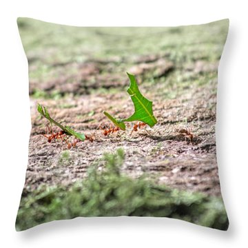 The Leaf Parade  Throw Pillow by Betsy Knapp