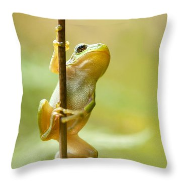 The Pole Dancer - Climbing Tree Frog  Throw Pillow by Roeselien Raimond