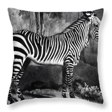 The Zebra Throw Pillow by George Stubbs