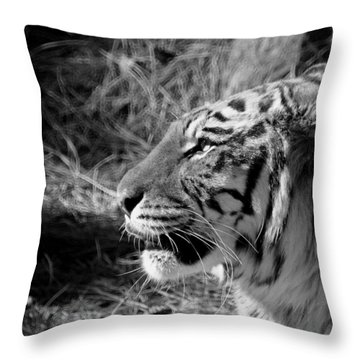 Tiger 2 Bw Throw Pillow by Ernie Echols