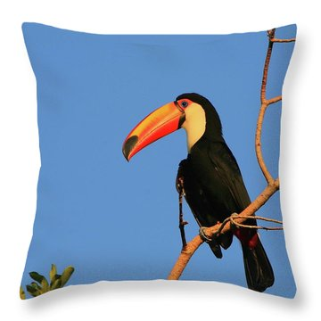 Toco Toucan Throw Pillow by Bruce J Robinson