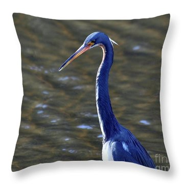 Tricolored Heron Pose Throw Pillow by Al Powell Photography USA