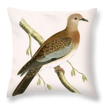 Turtle Dove Throw Pillow by English School