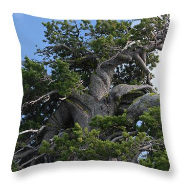 Twisted And Gnarled Bristlecone Pine Tree Trunk Above Crater Lake - Oregon Throw Pillow by Christine Till