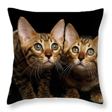 Two Bengal Kitty Looking In Camera On Black Throw Pillow by Sergey Taran